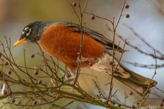 SV-Gallery-Birds-14