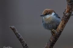 SV-Gallery-Birds-15