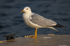 SV-Gallery-Birds-16