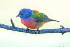 SV-Gallery-Birds-5