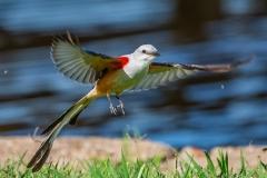 SV-Gallery-Birds-7