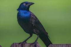 SV-Gallery-Birds-8