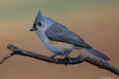 SV-Gallery-Birds-13
