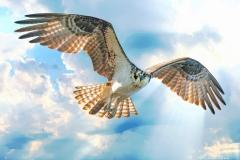 SV-Gallery-Birds-3